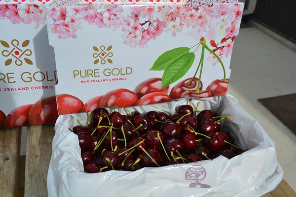 Pure Gold cherries in a box