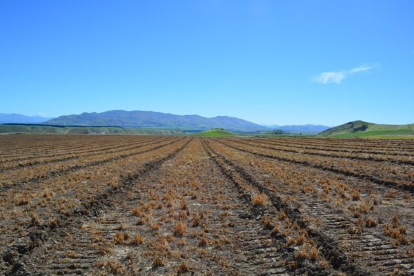 Uncultivated land waiting to become an orchard