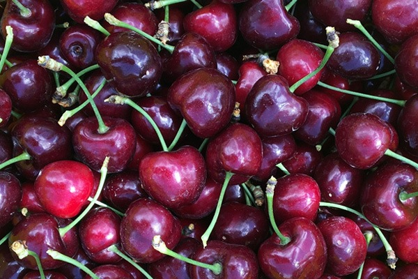 Close up of a bucketful of Romance cherries